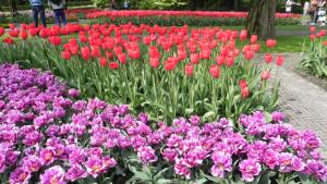 Jardins de Keukenhof