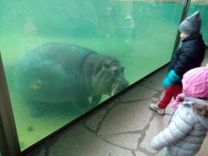 Hipopotamo Zoo de Berlim