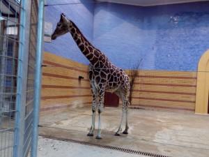 Zoo de Berlim